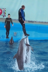 """Дельфинарий """"Лазаревский"""""""