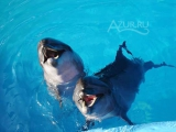 Дельфинарий «Афалина»