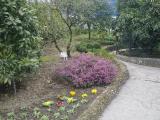 Сад-музей Дерево Дружбы